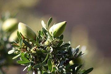 ARGANARGAN Bio-Arganöl 250ml, ungeröstet, kaltgepresst, auch für Haut- und Haarpflege geeignet - 7